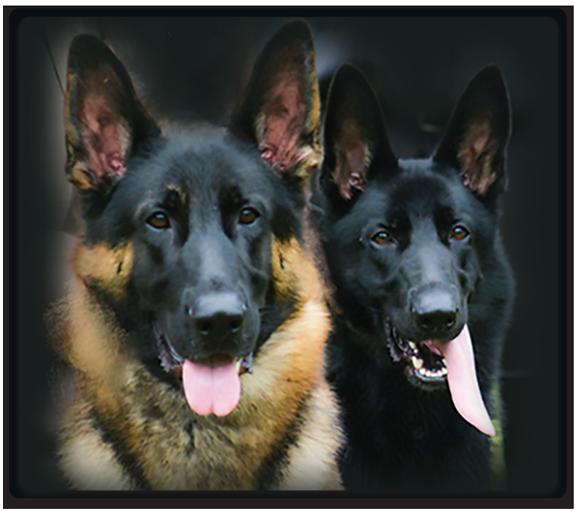 Heinerburg Shepherds